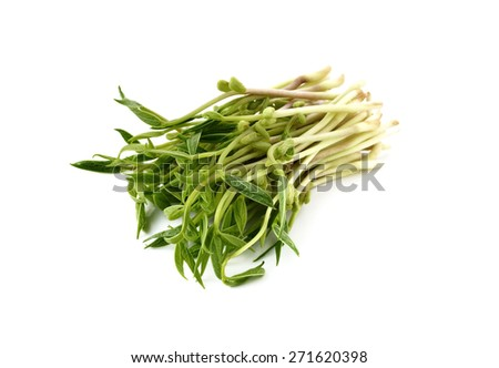 Chlorophylla green bean sprouts on white background - stock photo