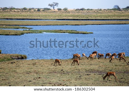 Chobe River, Chobe National Park, Botswana, Africa - stock photo