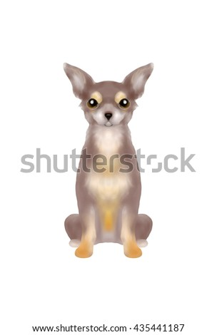 Chocolate color long coat chihuahua sitting