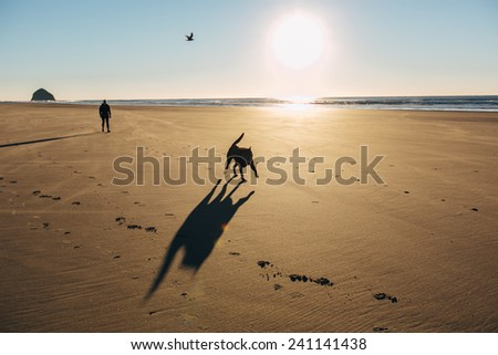 Chocolate Lab Running on Beach silhouette with bird in sky and owner behind him - stock photo