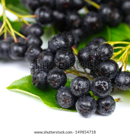 Chokeberry (Aronia ) Fruit on the white Background