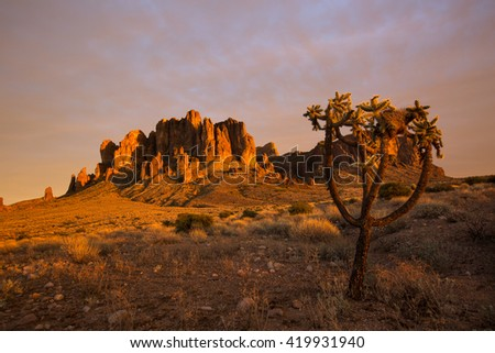 cholla cactus tree in the sunset light in the superstition wilde