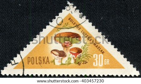 "CHONGQING, CHINA - April 22, 2014:a post stamp printed in POLAND shows a mushroom Suillus luteus, the series ""Mushrooms"", circa 1959 - stock photo"