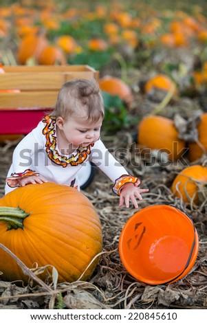 Choosing a pumpkin at a pumpkin patch on Fall day. - stock photo