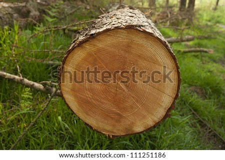 chopped tree stump showing rings