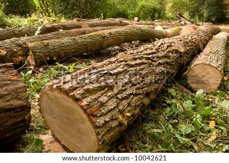 Chopped trees - stock photo
