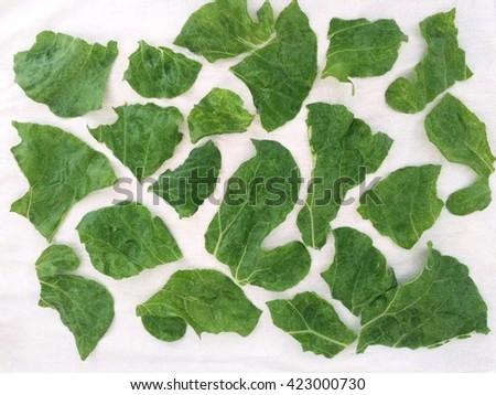 Chopped up kale - stock photo