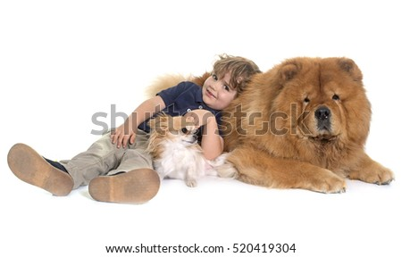 chow chow, chihuahua and little boy in front of white background