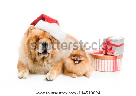 Chow-Chow in a red Santa Claus hat and spitz, Pomeranian dog near to a stack of boxes with gifts - stock photo