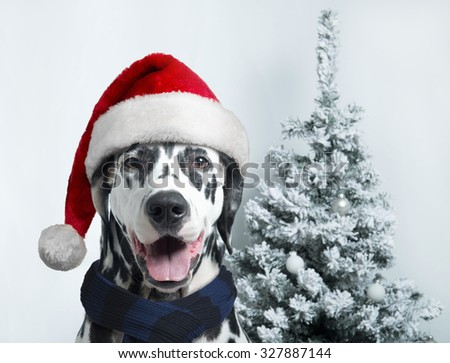 Christmas and New Year. Dalmatian Dog in Santa hats on a background of snow-covered trees - stock photo