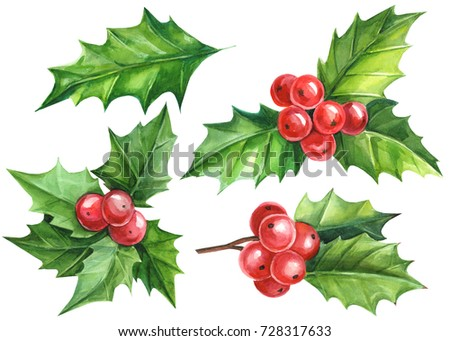 Holly Berries Stock Images Royalty Free Images Amp Vectors