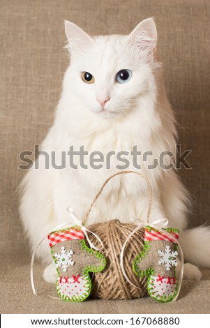 Christmas angora cat with mittens and twine - stock photo