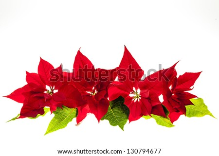 Christmas arrangement with red poinsettia plants isolated on white background