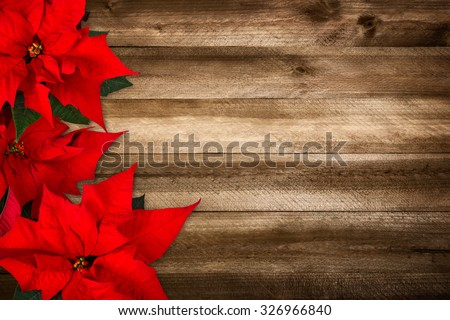 Christmas background composed of wood planks and poinsettia, with warm colors and nice vignetting - stock photo