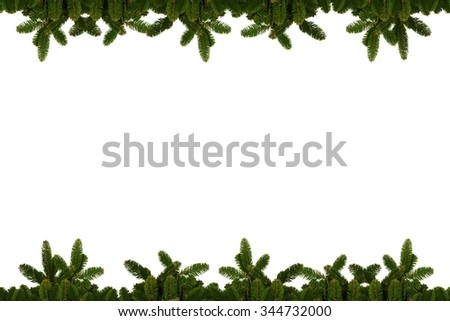 Christmas background - fir branches