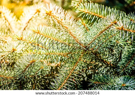 Christmas background. Green fir branch in sunshine - stock photo
