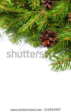 Christmas background with cones isolated on white