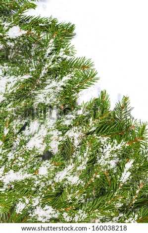 Christmas background with snow isolated on white