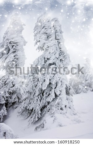 Christmas background with snowfall and snowy fir trees
