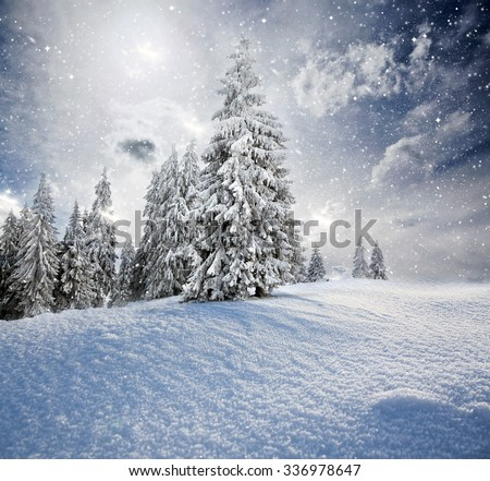 Christmas background with snowy fir trees and copy space