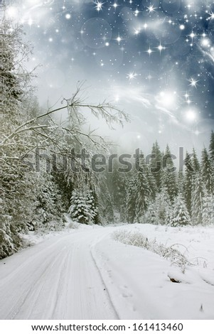 Christmas background with stars and snowy fir trees - stock photo