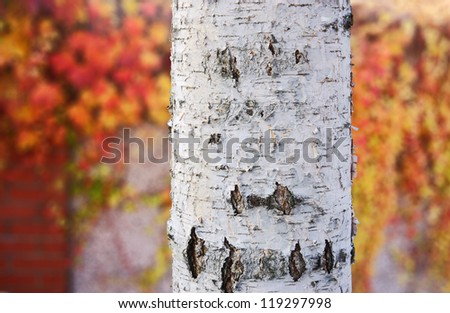 Christmas branches and decoration - stock photo