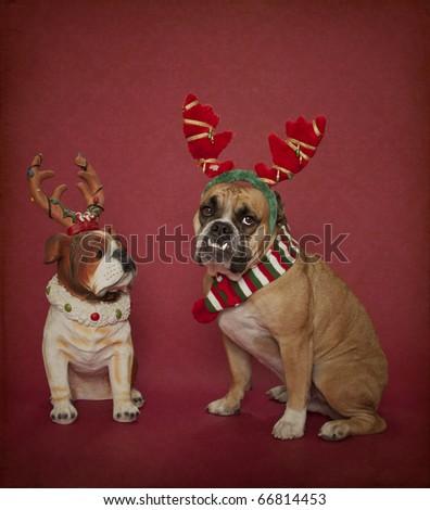 Christmas Bulldog and his buddy - stock photo