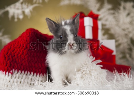 Christmas bunny, santa baby red hat