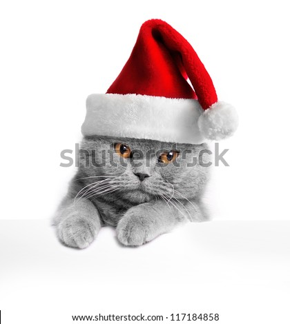 Christmas cat - stock photo