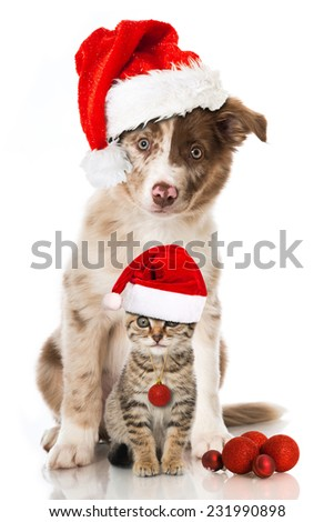 Christmas cat and dog - stock photo