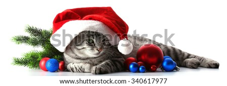 Christmas cat isolated on white