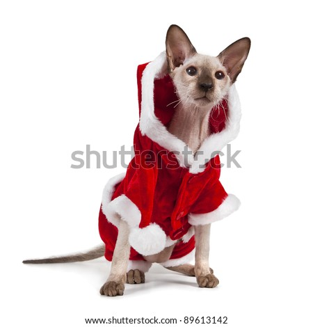 Christmas cat on a white background - stock photo