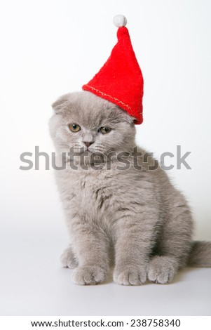 Christmas cat with a red cap. Gray kitten in a hat on a white background. Gray kitten Scottish Fold. Christmas card - stock photo