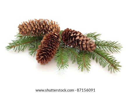 Christmas decoration of pine cone group with conifer fir leaf sprig isolated over white background. - stock photo
