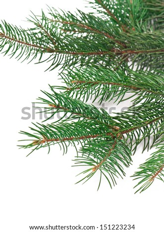 Christmas decoration with fir-tree on white background