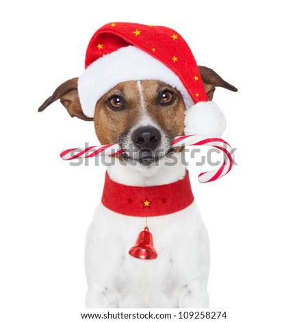 christmas dog as santa - stock photo