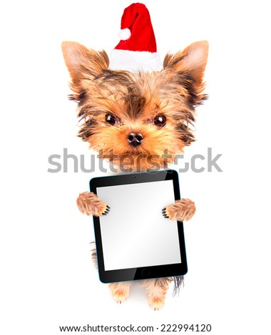 christmas dog as santa and holding blank tablet pc  - stock photo