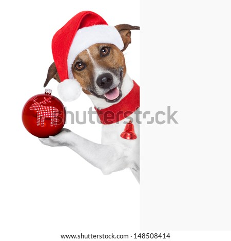 christmas dog as santa behind placard with a big red christmas ball - stock photo