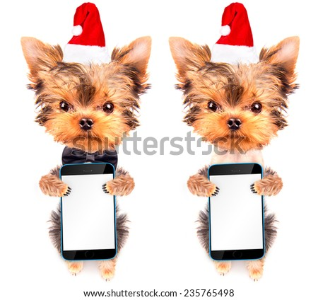 christmas dog as santa holding phone with empty white screen - stock photo