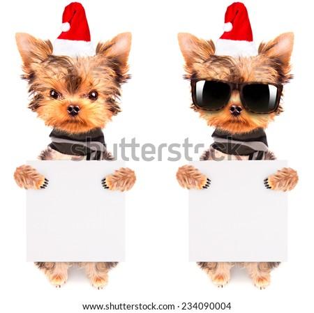 christmas dog as santa holding white paper banner - stock photo