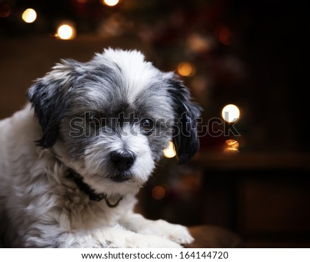 Christmas dog in front of tree  - stock photo