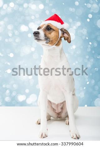 Christmas dog in santa hat - stock photo