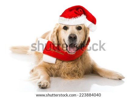 Christmas dog isolated on white
