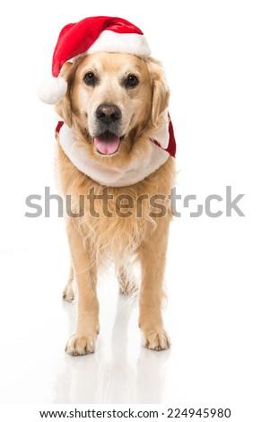 Christmas dog isolated on white - stock photo