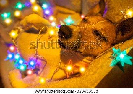christmas dog with fairy lights - stock photo