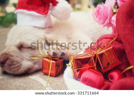Christmas dog with hat and gift
