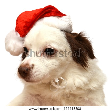 Christmas dog with Santa Claus hat isolated on white background