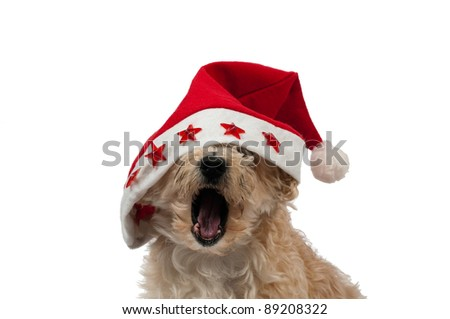 Christmas Dog Yawning