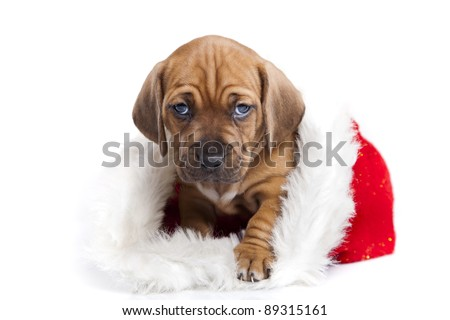 Christmas Dog, young gift