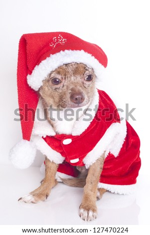 christmas dressed up dog
